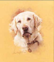 Yellow Lab by David Barfield