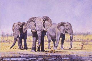 Nyamandhlovu by John Wynne Hopkins.