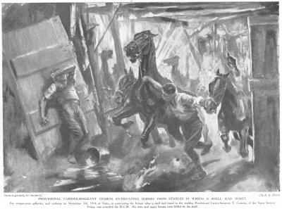 Provisional Farrier Sergeant Cussens extricating horses from stables in which a shell had burst.