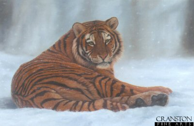 Siberian Snow by Jonathon Truss.