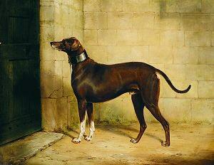 A Greyhound, 1843 by William Barraud. (GS)