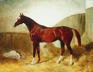A Bay Racehorse in a Stable by Thomas Barratt of Stockbridge. (GS)