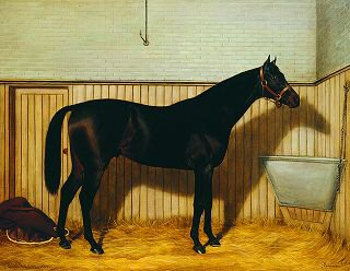 Common, A Brown Racehorse in a Stable, 1903 by Emil Adam. (GS)