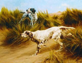 Setters in the Dunes by Thomas Blinks. (GS)