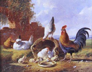 Spring Chickens by Albertus Verhosen (GL)