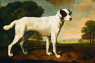 Portrait of a Dog in Gatton Park by George Stubbs (GL)