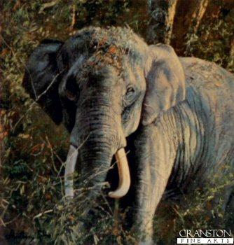 Indian Elephant by Anthony Gibbs.
