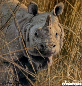 Indian Rhinoceros by Anthony Gibbs.