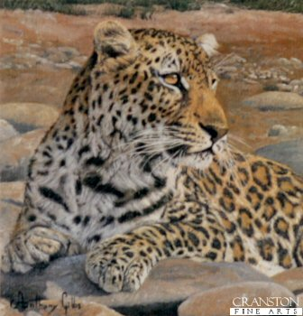 Leopard by Anthony Gibbs.