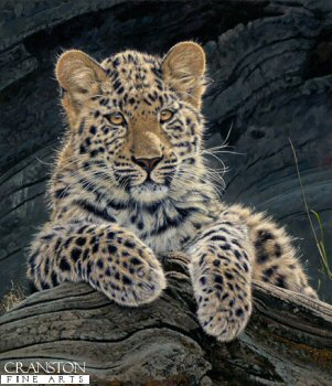 Amur Gold by Anthony Gibbs.