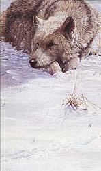 Cold Comfort by Julie Askew