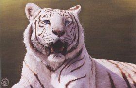 Bengal Beautiful by Jonathon Truss. (GS)