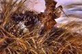CWN361.  Irish Water Spaniel Flushing by Mick Cawston.  ......