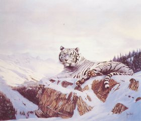 Siberian Tiger by Spencer Hodge. (Y)