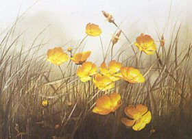 Buttercups by Mary Dipnall