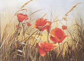 Poppies by Mary Dipnall