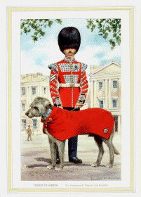 Irish Guards by Douglas Anderson
